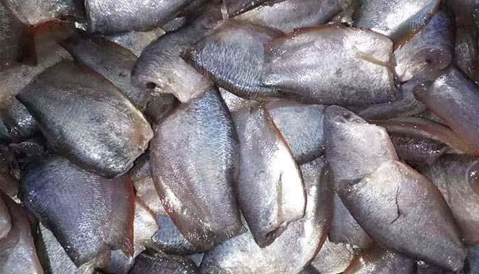 Mô tả sản phẩm khô cá sặc đồng Bạc Liêu